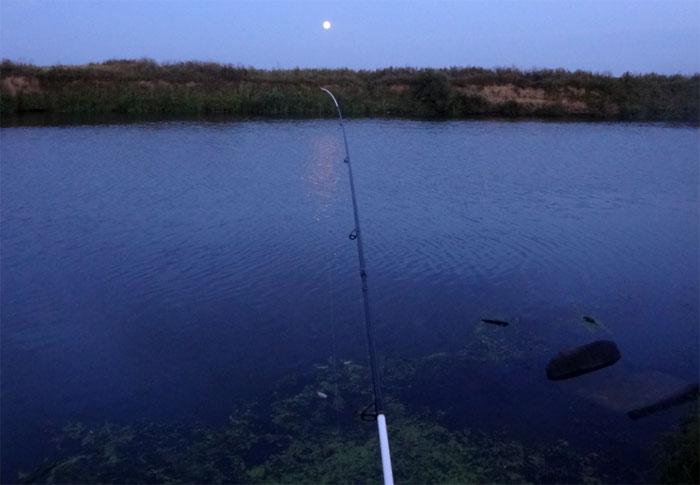 спинн salmo rockfish